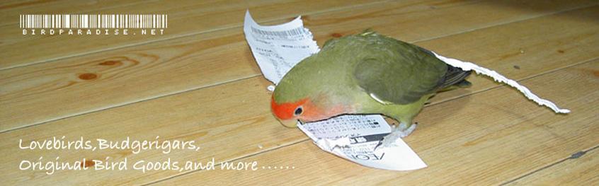 birdparadise.net